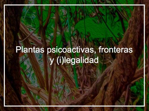 Plantas psicoactivas, fronteras e (i)legalidad