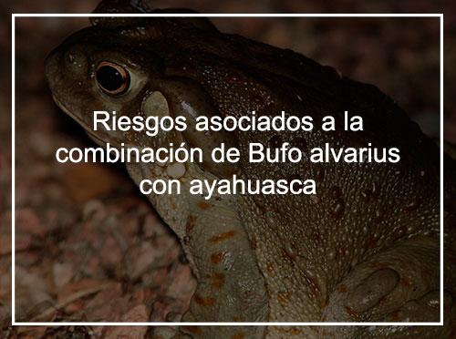 Riesgos asociados a la combinación de Bufo alvarius y ayahuasca