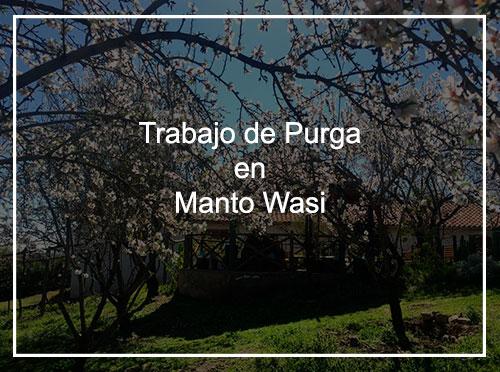 Trabajo de Purga en Manto Wasi