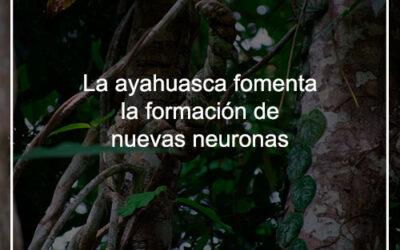 La Ayahuasca fomenta la formación de nuevas neuronas